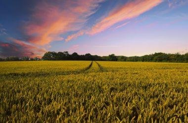 I molteplici scopi perseguibili con la scelta di destinare un'area a verde agricolo e le attività compatibili